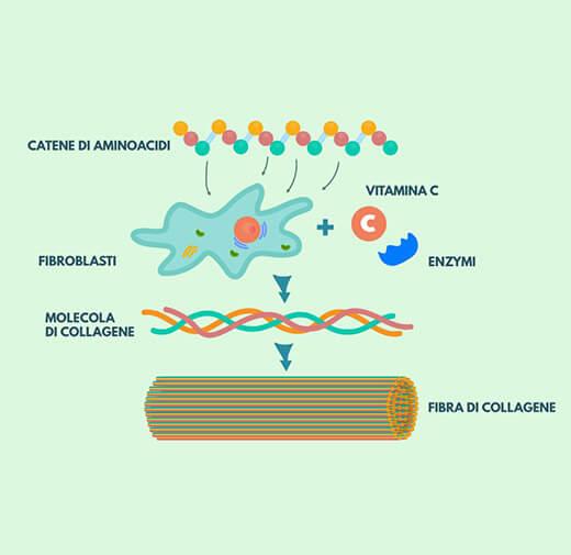 Collagene idrolizzato
